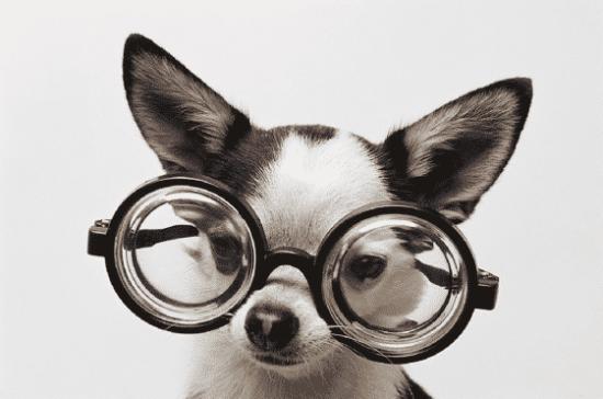 Crazy Glasses