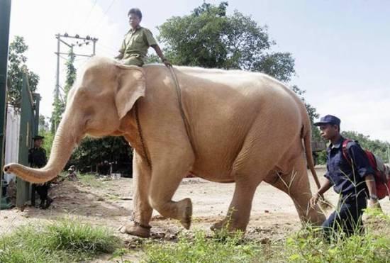 White_Elephant_003