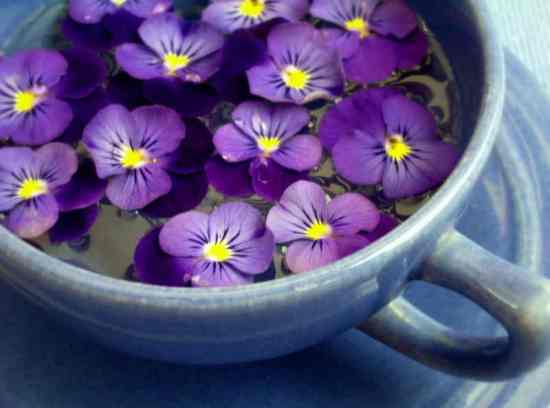 11 Best Edible Flowers from Your Garden2