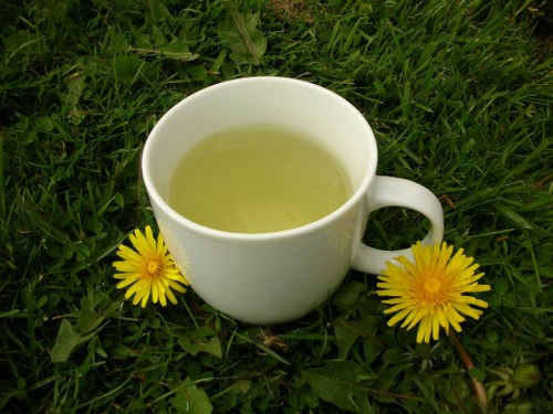 dandelion tea efficient ways lose belly fat