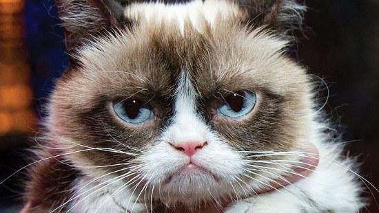 christmas card ideas grumpy cat