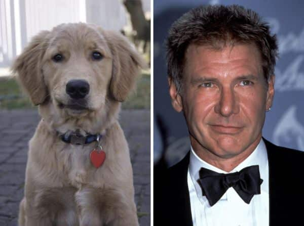 Celebrity Lookalikes Even Affect Harrison Ford