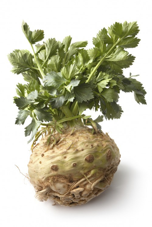 Celeriac Is One Of The Vegetables That You Know Nothing About
