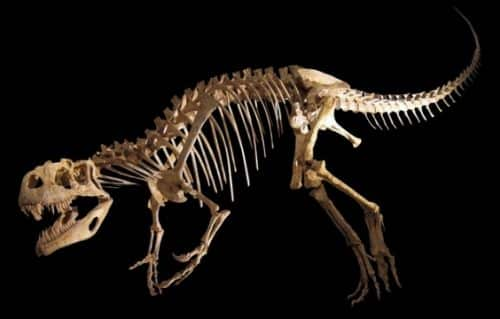 Hollow Bones - Amazing Facts About Dinosaurs