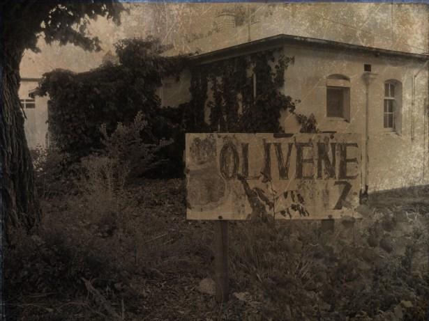 Olivene1