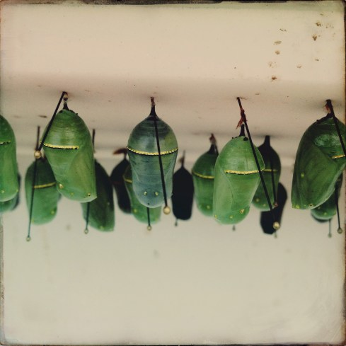 Cocoons - Conservatory of Flowers