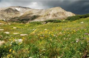 Mountains and wildflowers
