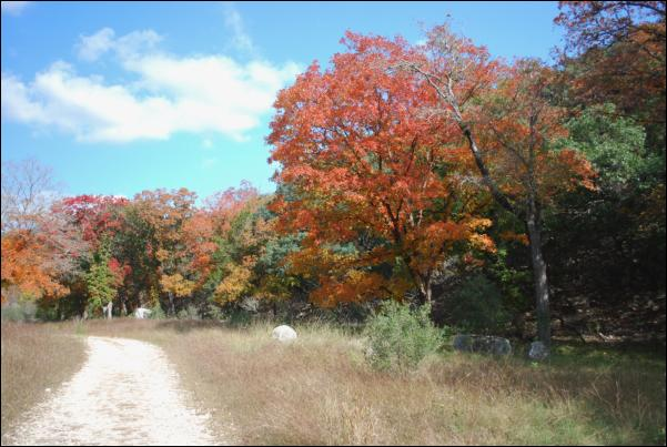 Picture at Lost Maples State Natural Area