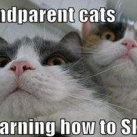 Humor Me - Grandparent Cats