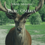 Parc Omega is a Wild Family Travel Adventure #Outaouaisfun