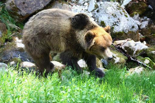Il lago di tovel amore a prima vista ti amo trentino for Cabina di montagna grande orso