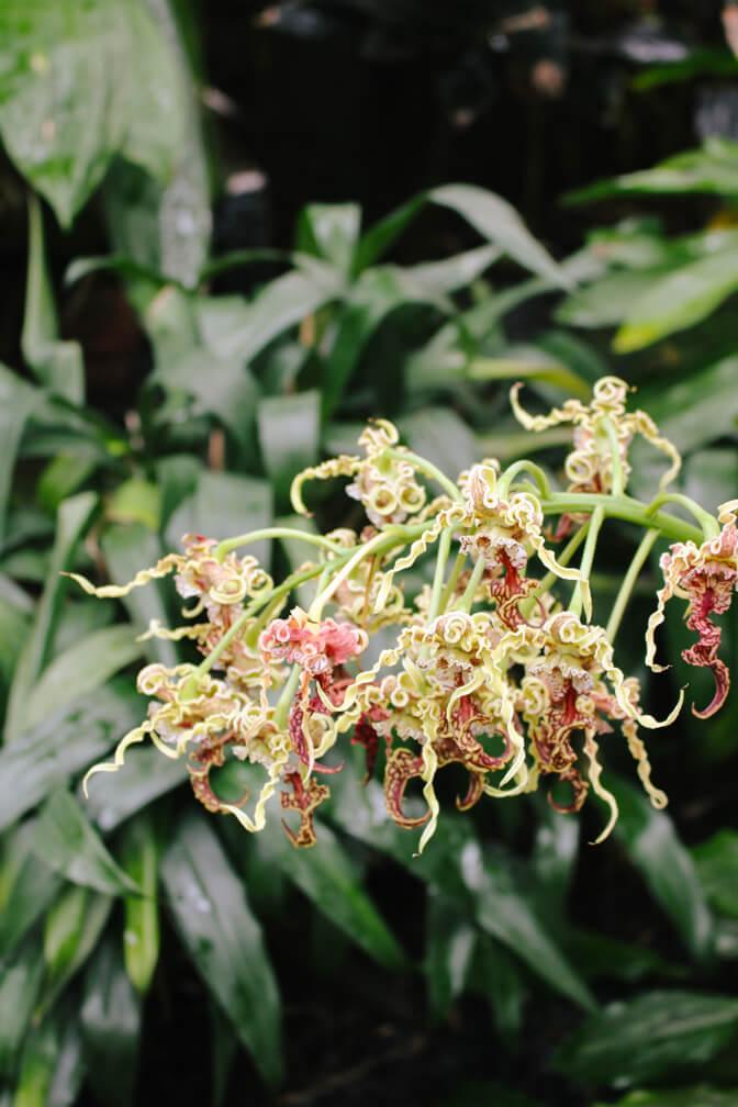 atlanta-botanical-garden-12a