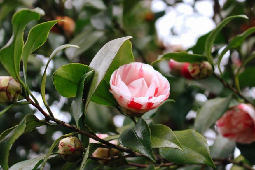 atlanta-botanical-garden-45a