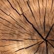 tree-stump-texture