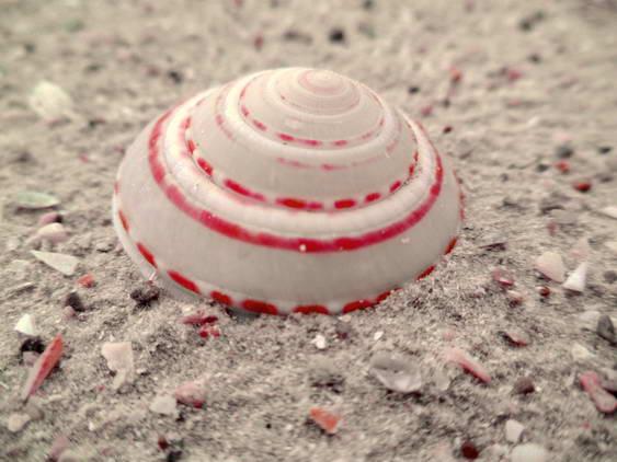 Ao Manao Sea Shell