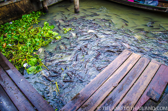 Taling Chan Floating Market Catfish