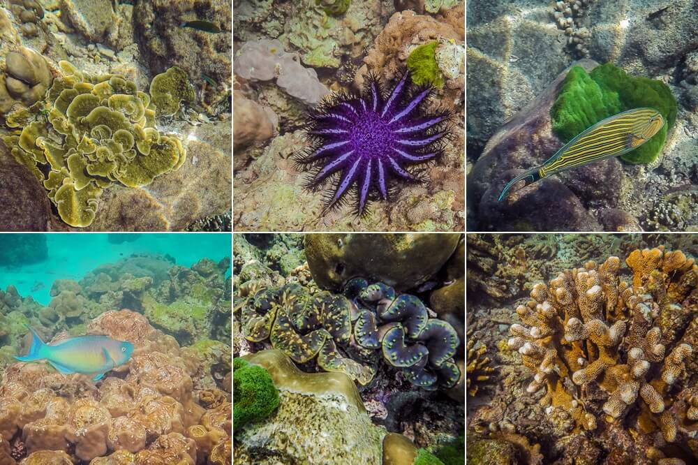 Tropical underwater creatures while snorkeling Koh Rok in the Andaman Sea Thailand
