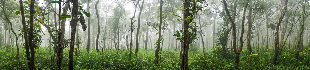 Dok Krachiao Nature Trail in Pa Hin Ngam National Park