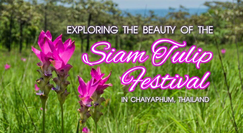 Siam Tulip Festival in Chaiyaphum