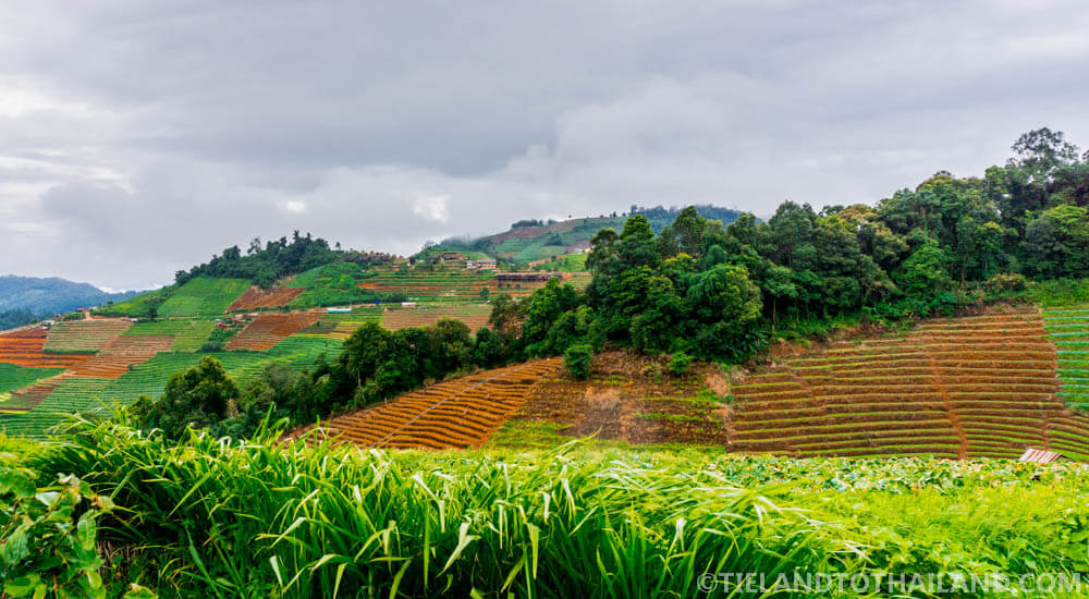 Organic step fields at Mon Cham in Chiang Mai, Thailand