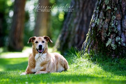 hundefoto1
