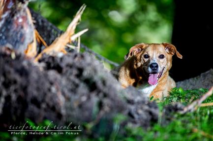 hundefoto4