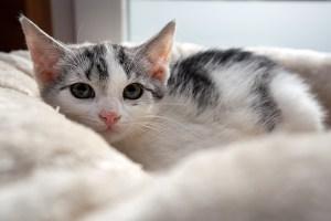 Kitten_Olfen_9494