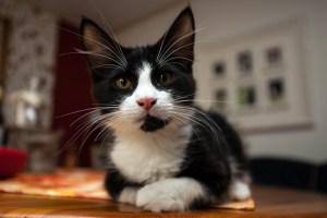 Kitten_Olfen_9507