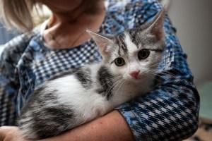 Kitten_Olfen_9509