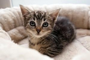 Kitten_Olfen_9512