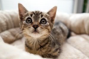 Kitten_Olfen_9538