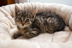 Kitten_Olfen_9543