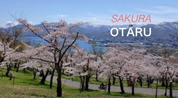 sakura_otaru