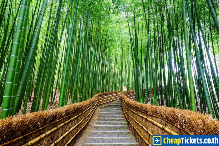 asia-japan-kyoto-bamboo-forest