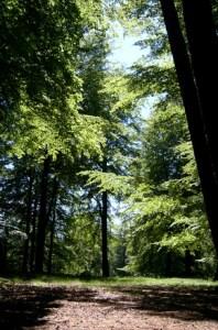wood-1-1492355