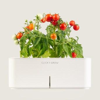 Smart Flowerpot with Mini Tomato