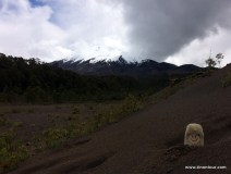 Puffbohne in Lavastaub und im Hintergrund schwer zu erkennen: der Vulkan