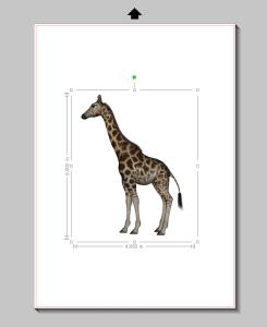 giraffesize