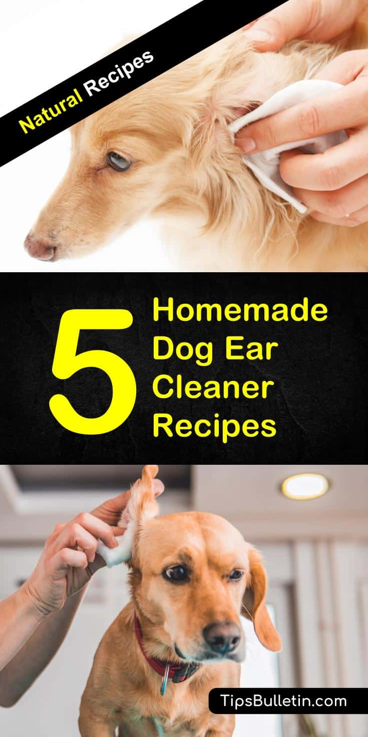 Large Of Homemade Dog Ear Cleaner