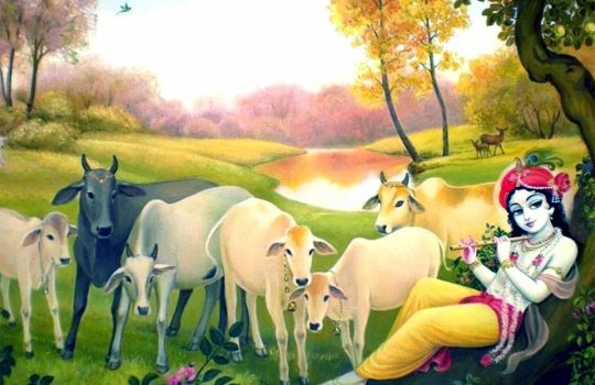 Lord Sri Krishna With Holy Indian Cows