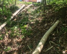Skidding-Logs