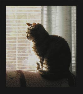 Molly In The Window Photo