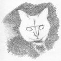 Cat Sketch Step Two