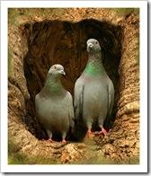 palomas-en-casa.jpg