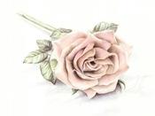 una-rosa.jpg