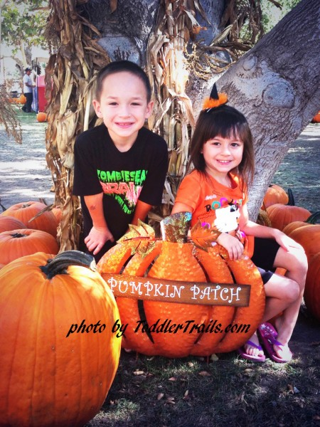 Pumpkin Patch Fun