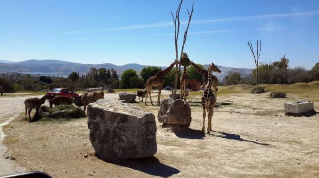 africam-safari13