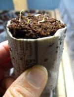 Como hacer un semillero con papel periodico