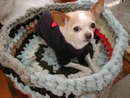 Como hacer una cama para perros reciclada todo manualidades - Como hacer camitas para perros ...