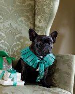 Como hacer un collar con cascabeles para tu mascota